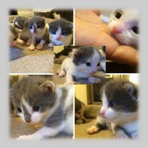 1984 Maisies kittens